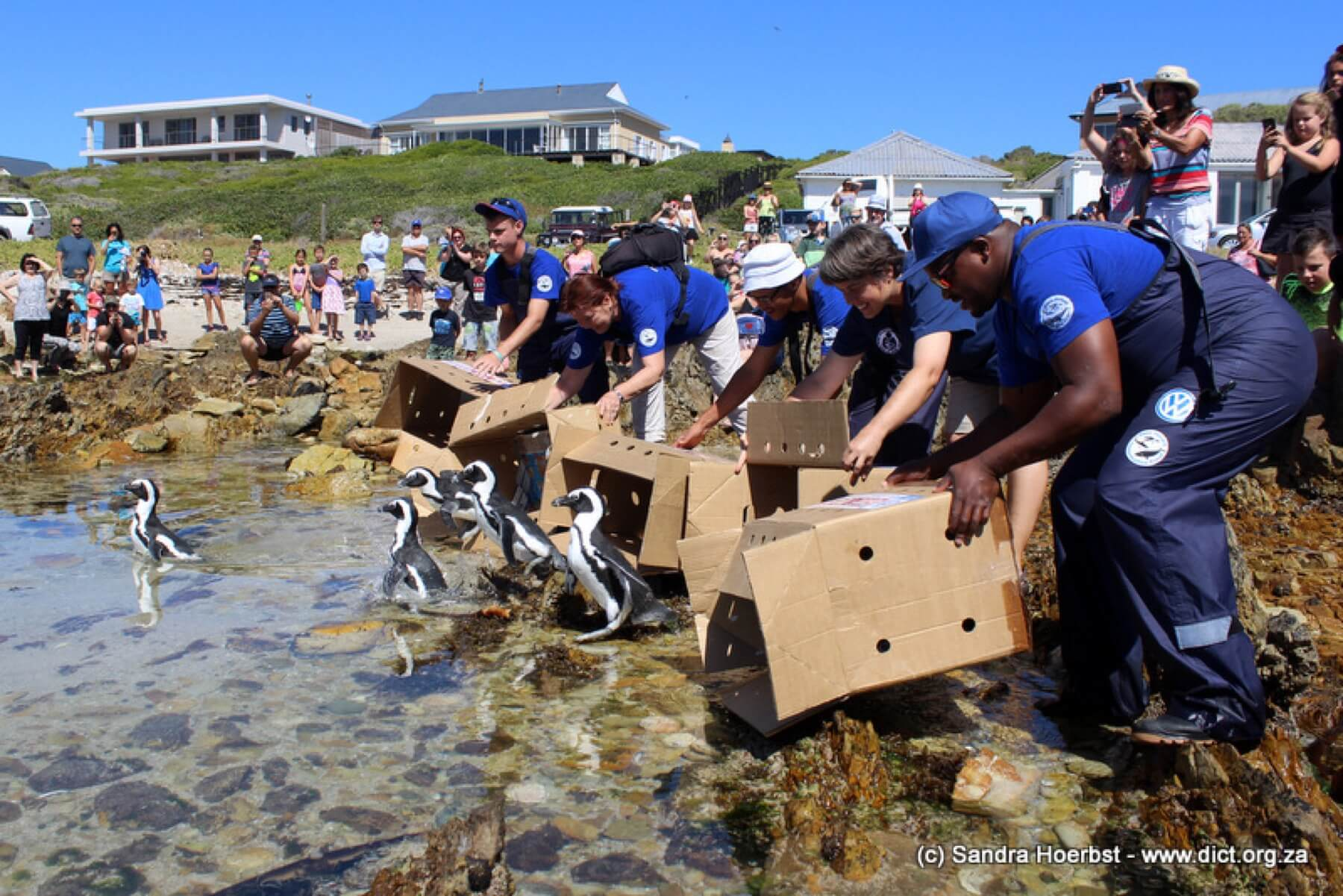 Beach Release In Kleinbaai