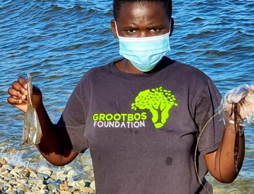 Grootbos Earth Rangers Marine Experience With Dyer Island Conservation Trust